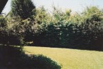 Looking out across the back yard from the house reveals an eight foot high hedge - even before you reach the three rows of trees prior to the fence and sidewalk behind our house - complete privacy that felt like we were miles away from any other civilization.