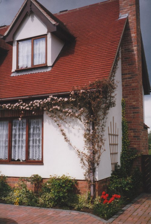 Our clematis vine began opening its first pink flowers of the year, as I guided it along a series of lead wires, suspended away from the exterior house walls in order to train it in the directions I wanted this beautiful vine to grow along our roofline.