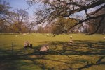 Ickworth House has acres of formal Italianat gardens, parkland and woodland belonging to the estate, and I took this photo of a peaceful, pastoral landscape scene of sheep grazing in an idyllic meadow while visiting the grounds of Ickworth House.